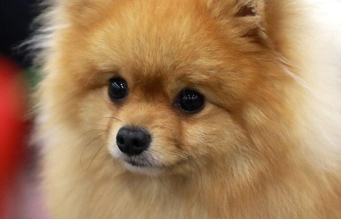 [:uk]Уход за шерстью собаки[:ru]Уход за шерстью собаки[:en]Уход за шерстью собаки[:]
