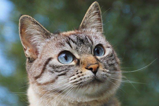 [:uk]Важливість вітамінів для котів[:ru]Важность витаминов для котов[:en]The importance of vitamins for cats[:]