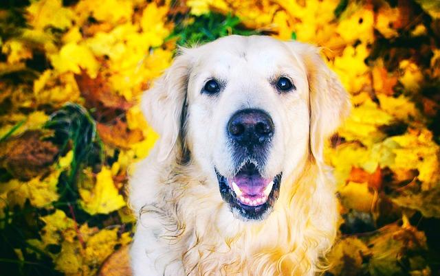 [:uk]Догляд за собаками в осінній період[:ru]Уход за собаками в осенний период[:en]Dog caring in the fall[:]